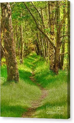 Lets Walk Along The Sunlit Woodland Path Canvas Print by John Kelly