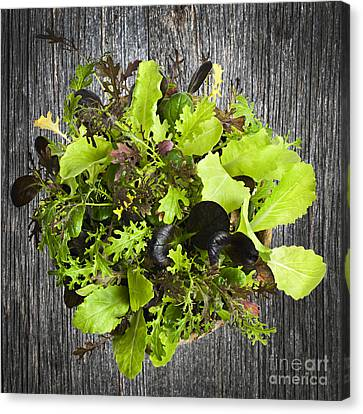 Lettuce Seedlings Canvas Print by Elena Elisseeva