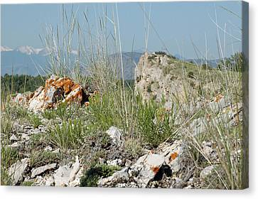 Lichen Covered Rocks At Missouri Headwaters State Park Montana Canvas Print by Bruce Gourley