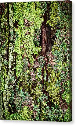 Lichen Canvas Print by Elena Elisseeva