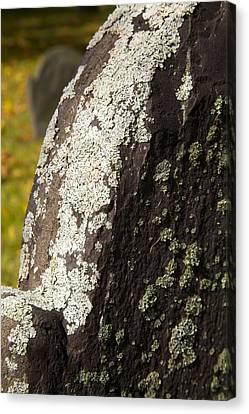 Lichen On Headstone Canvas Print by Allan Morrison