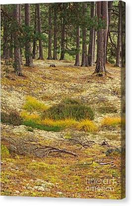 Lichens And Grasses On The Forest Floor Canvas Print by Louise Heusinkveld