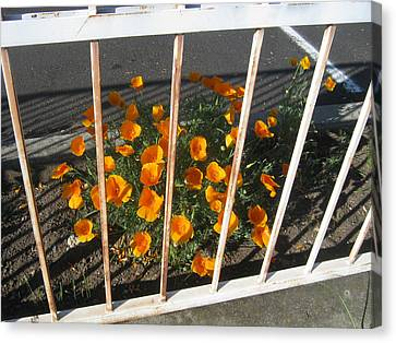 Canvas Print featuring the photograph Life Behind Bars by Marie Neder