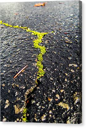 Canvas Print featuring the photograph Life Between The Cracks by Mike Lee