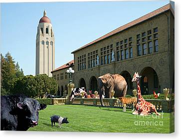 Life Down On The Farm Stanford University California Dsc685 Canvas Print by Wingsdomain Art and Photography