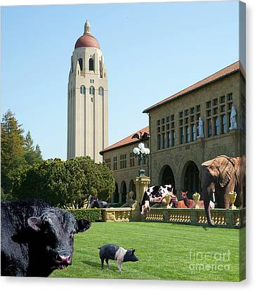 Life Down On The Farm Stanford University California Square Dsc685 Canvas Print by Wingsdomain Art and Photography