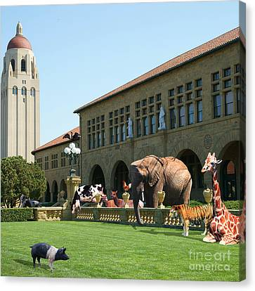 Life Down On The Farm Stanford University California Square V2 Dsc685 Canvas Print by Wingsdomain Art and Photography