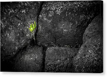 Life Finds A Way Canvas Print by Marvin Spates