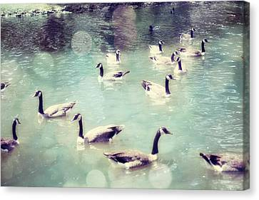 Flock Of Geese Canvas Print - Life Is But A Dream by Amy Tyler