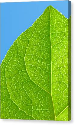 Life Of A Leaf Canvas Print by Joan Herwig