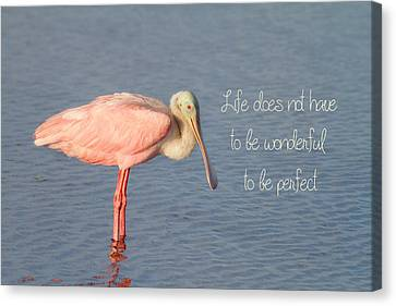 Spoonbill Canvas Print - Life Wonderful And Perfect by Kim Hojnacki