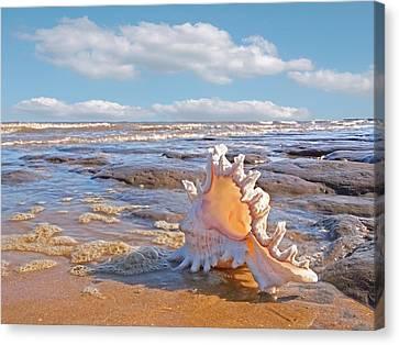 Life's A Beach - Murex Ramosus Seashell Canvas Print by Gill Billington