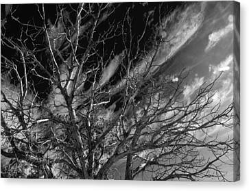 Canvas Print featuring the photograph Lifes End by Eric Rundle