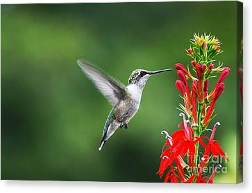 Canvas Print featuring the photograph Lifes Little Pleasure by Judy Wolinsky