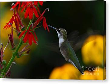 Canvas Print featuring the photograph Lifes Little Pleasures 2 by Judy Wolinsky