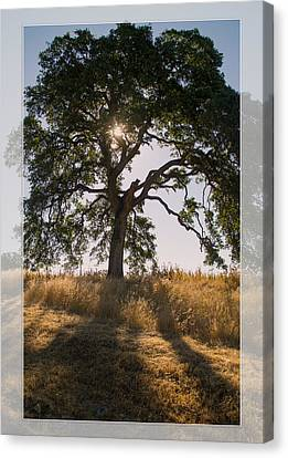 Light And Life Canvas Print by Rima Biswas
