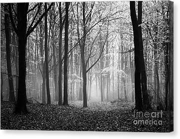 Light And Shadow Canvas Print by Anne Gilbert