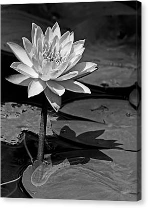 Light And Shadow Canvas Print by Dawn Currie