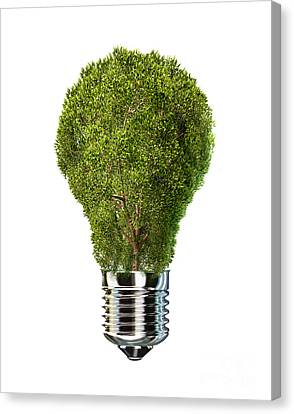 Light Bulb With Tree Inside Glass Canvas Print
