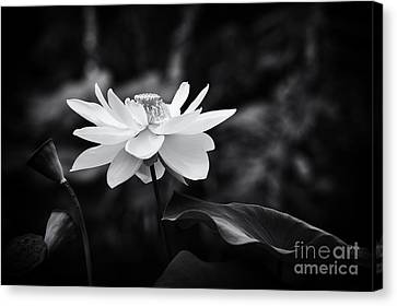 Aquatic Plant Canvas Print - Light In Dark Spaces by Tim Gainey