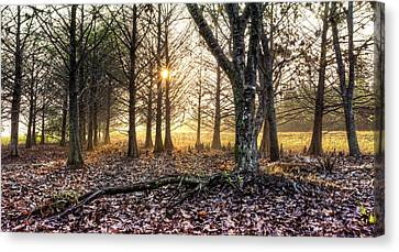 Light In The Trees Canvas Print by Debra and Dave Vanderlaan