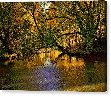 Light In The Trees Canvas Print by Leif Sohlman