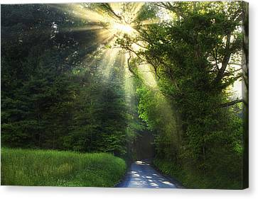 Light In The Woods Canvas Print by Andrew Soundarajan