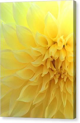 Angelical Canvas Print - Light Of Faith by The Art Of Marilyn Ridoutt-Greene