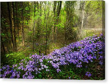 Light Of The Forest Fairies Canvas Print by Debra and Dave Vanderlaan