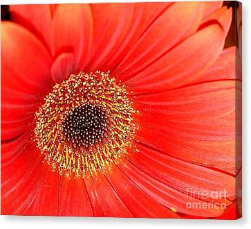 Canvas Print featuring the photograph Light On by Katy Mei