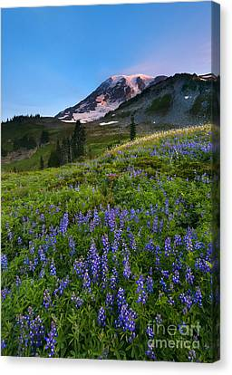 Light On The Mountain Canvas Print by Mike Dawson