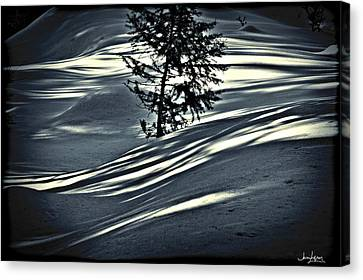Light On The Snow Canvas Print by Janie Johnson
