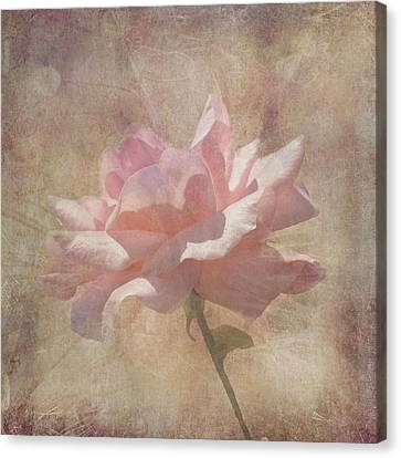 Light Pink Grunge Rose Canvas Print by Rosalie Scanlon