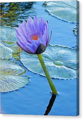 Light Purple Water Lily Canvas Print by Pamela Walton