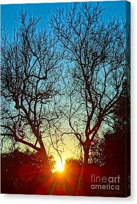 Light Sanctuary Canvas Print