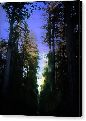 Canvas Print featuring the digital art Light Through The Forest by Cathy Anderson