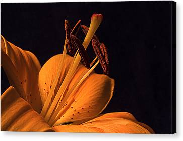 Canvas Print featuring the photograph Light Touch Ll by Shirley Mitchell
