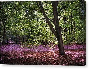 Light Tree In Hoge Veluwe National Park. Netherlands Canvas Print by Jenny Rainbow