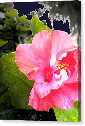 Lighted Flower Canvas Print by Maureen Kyle