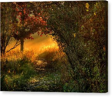Lighted Path Canvas Print