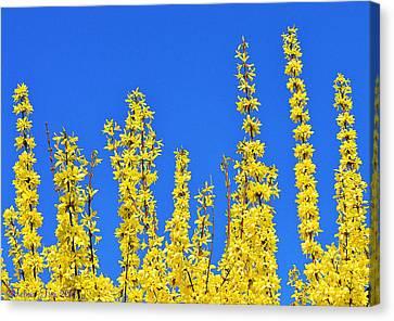 Lighting The Spring Sky Canvas Print by Felicia Tica