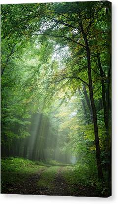 Lighting The Way Canvas Print by Bill Wakeley