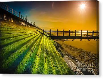 Lighting The Way Canvas Print by Darren Wilkes