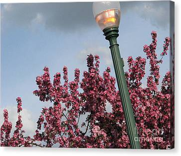 Canvas Print featuring the photograph Lighting Up The Day by Michael Krek