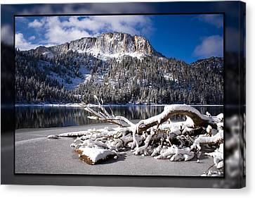 Lightly Powdered 2 Canvas Print by Chris Brannen