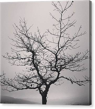 Lightness Tree Canvas Print