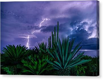 Lightning During Storm Canvas Print by Dmitry Sergeev