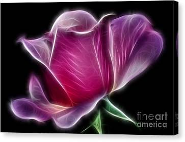 Lightning Rose Canvas Print by Kaye Menner