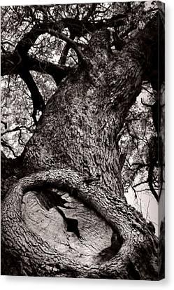 Lightning Tree  Canvas Print by Trish Mistric