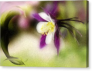 Like A Dove Canvas Print by K Powers Photography